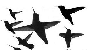 Google внедряет алгоритм Hummingbird